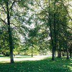 Alter Kurpark in Bad Soden